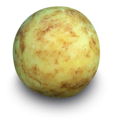 bonbon pomme de terre d'Alsace praliné
